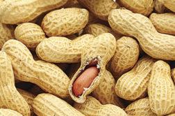 PeanutScience_FT