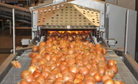 Pasteurization System for Onions Increases Yield, Improves Food Safety